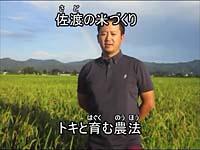 トキと育む農法(佐渡)(トキと暮らす郷づくり認証米)
