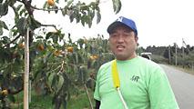 おけさ柿をつくっている農家のおはなし