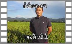 トキと育む農法 ―トキと暮らす郷づくり(認証米)―